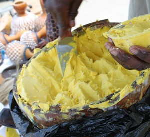 a behind the scenes look at the african shea butter BEHIND THE SCENES   AFRICAN SHEA BUTTER
